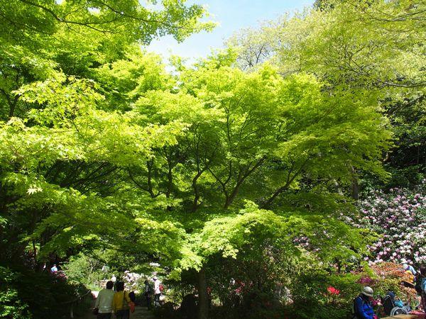 神戸森林植物園01